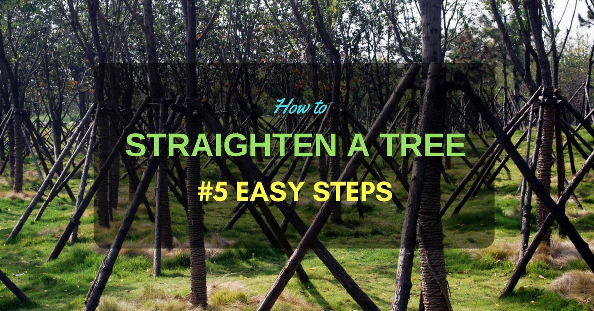How To Straighten A Tree 5 Simple And Easy Steps To Think On