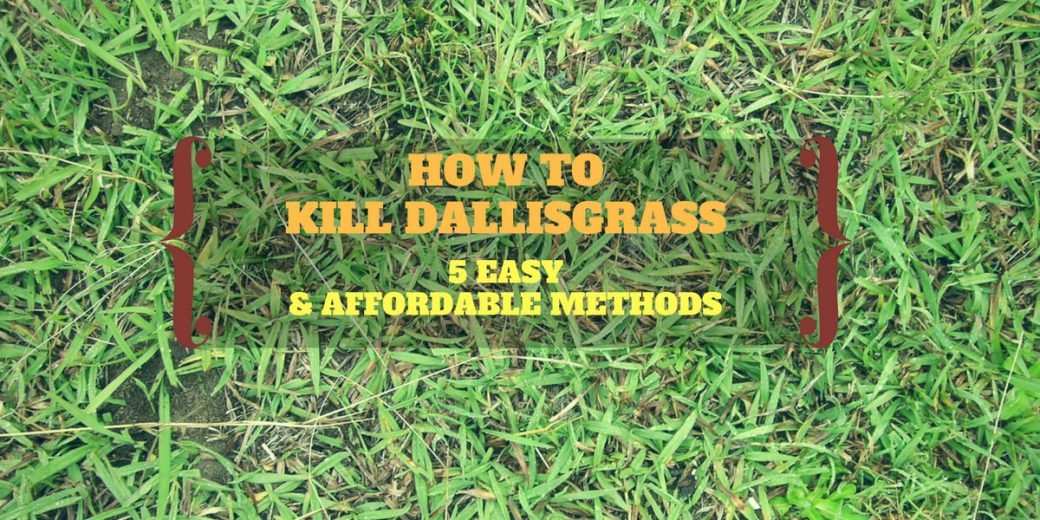 How To Kill Dallisgrass 5 Easy Affordable Methods