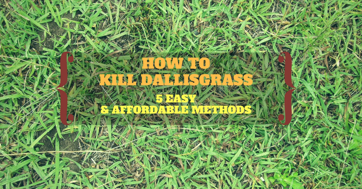 How To Kill Dallisgrass 5 Easy Amp Affordable Methods