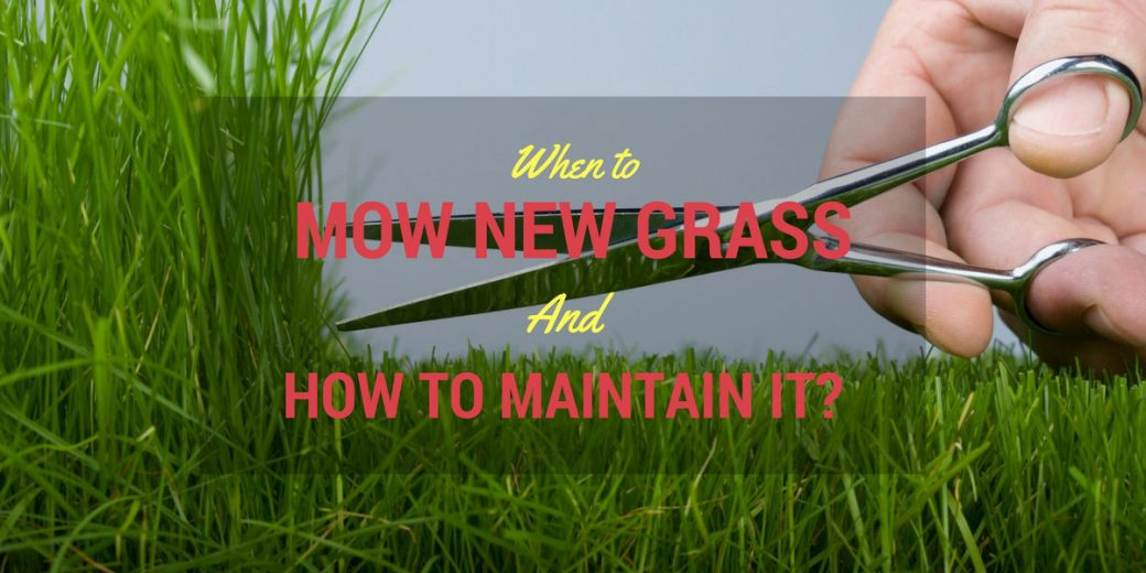 When to mow new grass and how to maintain it for How often should you mow your lawn