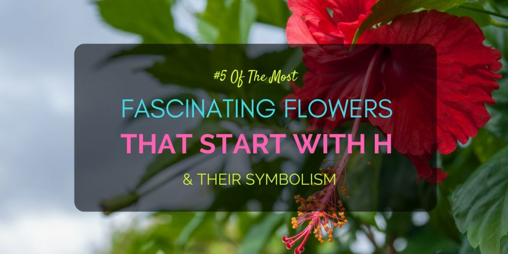 5 Of The Most Fascinating Flowers That Start With H Their Symbolism
