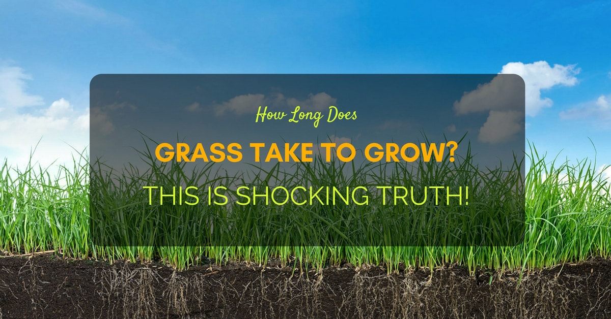 How Long Does Grass Take To Grow? This is Shocking Truth!