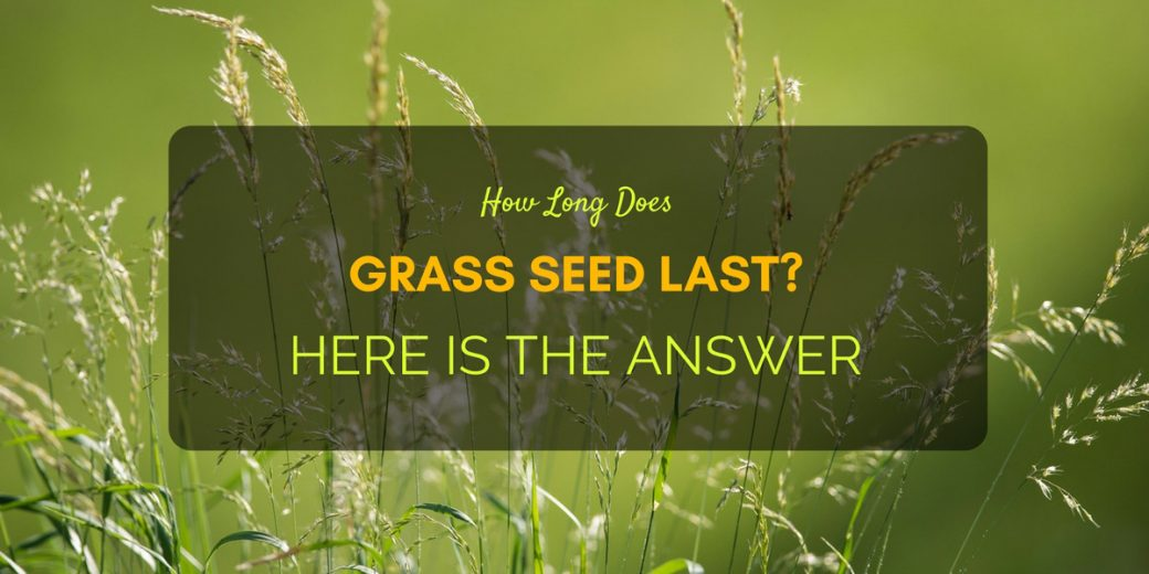 How Long Does Grass Seed Last Here Is The Answer