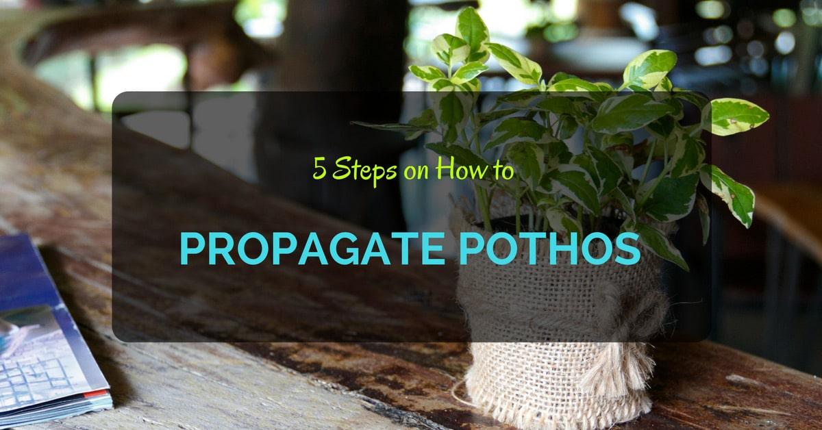 5 Steps On How To Propagate Pothos