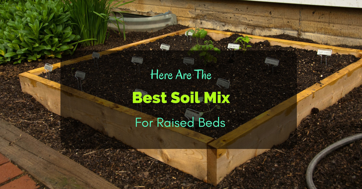 here are the best soil mix for raised beds