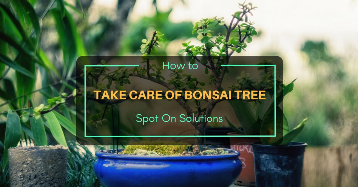 How To Take Care Of Bonsai Tree Spot On Solutions