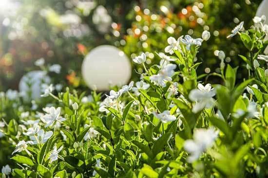 Best Fertilizers For Gardenias