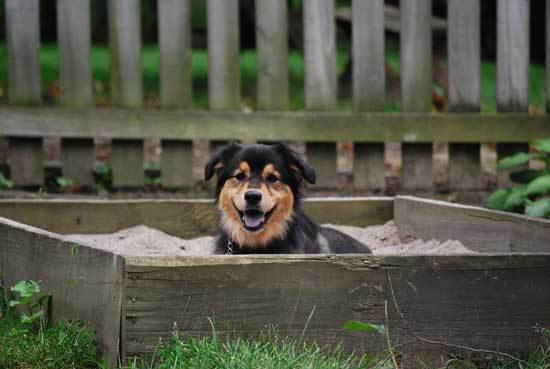 Dog Sandbox