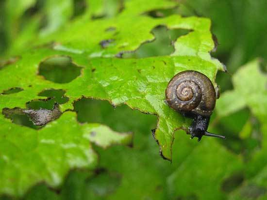 Snail eating plant
