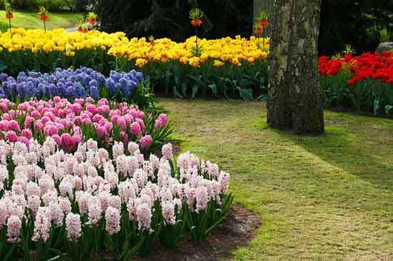 flower beds to Stop Grass from Spreading