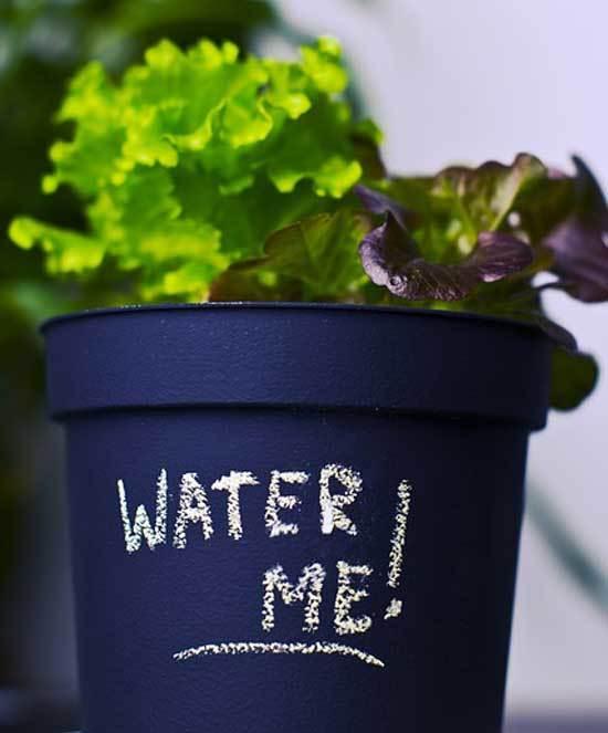 Lettuce under water 2