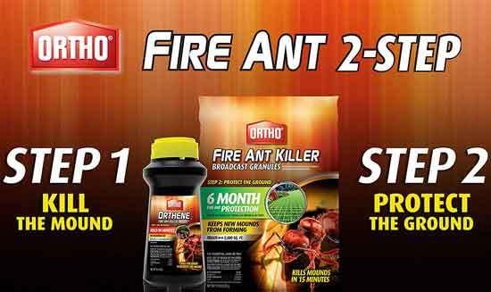 Ortho Orthene Fire Ant Killer1