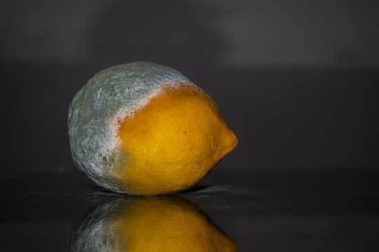 Lemon Spoilt