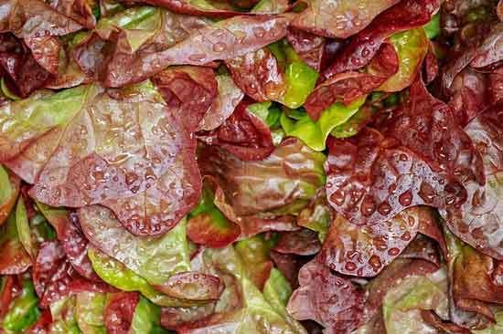 Lettuce Soggy
