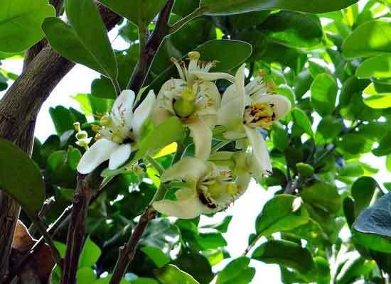 Ugly Fruit Flower