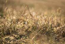 What Causes the Grass to Turn Yellow