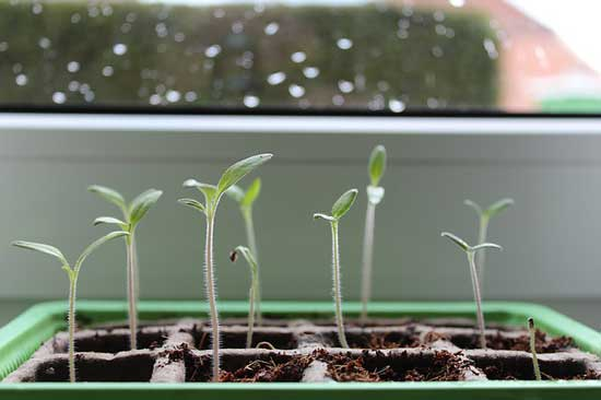 How Long Does It Take for Seeds to Sprout 2