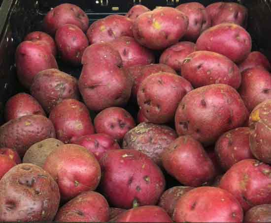 How to Increase the Shelf Life of Russet Potatoes or How to Preserve Them More Efficiently