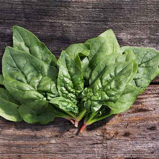 Regiment Spinach