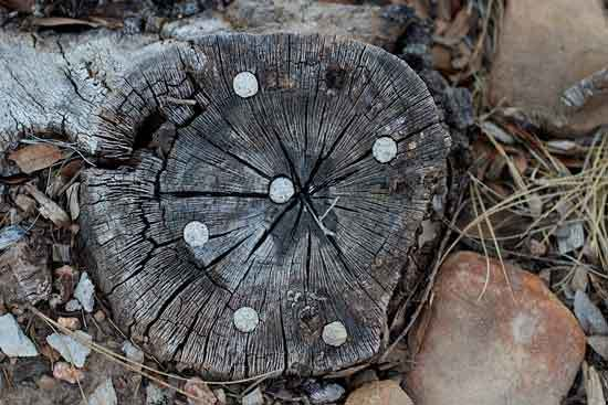 Drill Holes in Tree Roots