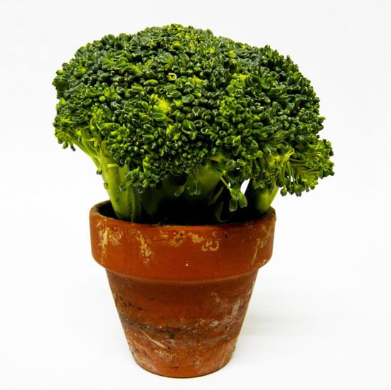 How To Grow Broccoli Indoors