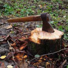 How To Remove Tree Stump