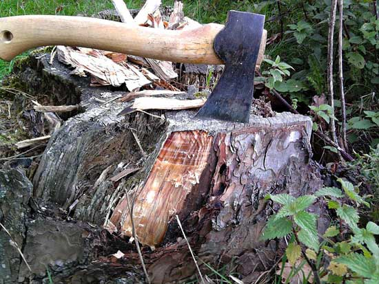 Manual Remove Tree Stumps