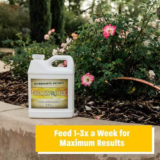 Best Fertilizers for Potatoes Humboldts Secret Golden Tree