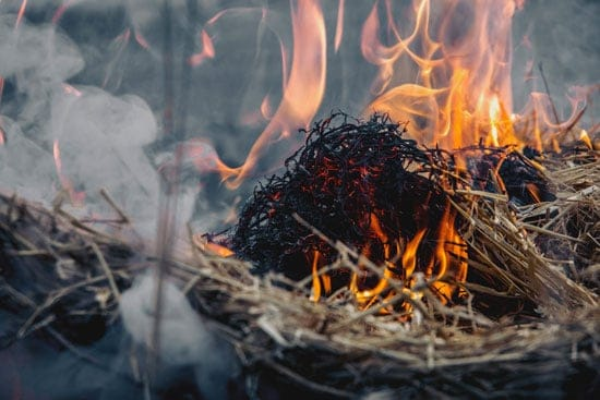 Dried Grass on Fire
