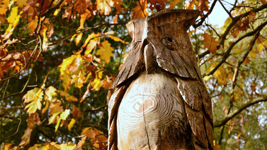 Get Rid of Mockingbirds by Owl Scarecrow Tactic