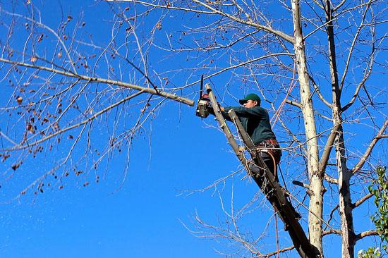 Get Rid of Mockingbirds by Pruning Tree