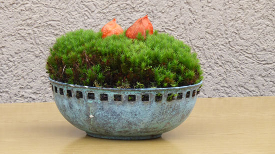 Grow Moss in Container