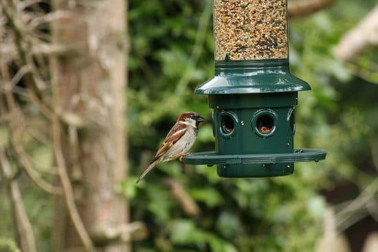 How To Keep Birds From Eating Grass Seeds Install Bird Feeders