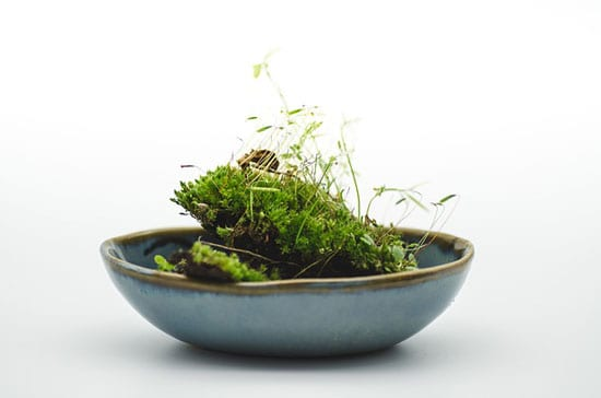 How to Grow Moss Indoors