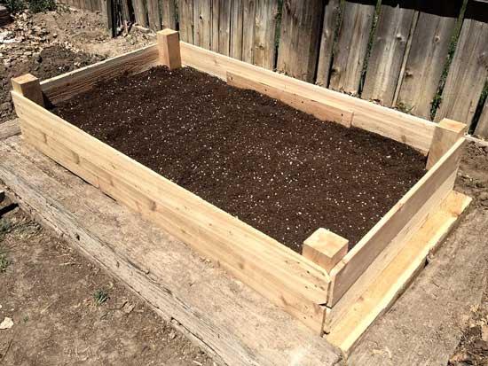 How to Grow Portobello Mushrooms Raised Garden Bed
