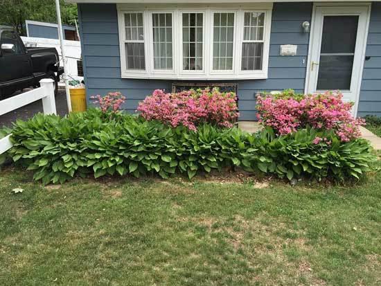 Rosebud Azalea Front Entrance Planting