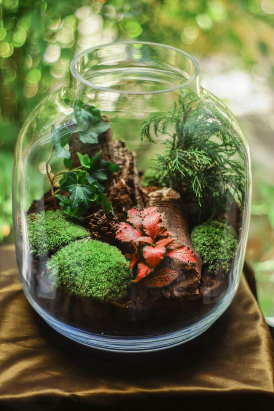 glass container for growing moss
