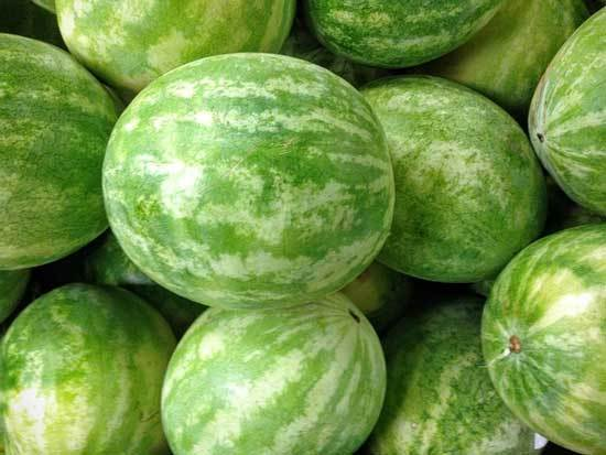 12 of the Climbing Fruit Plants Watermelon
