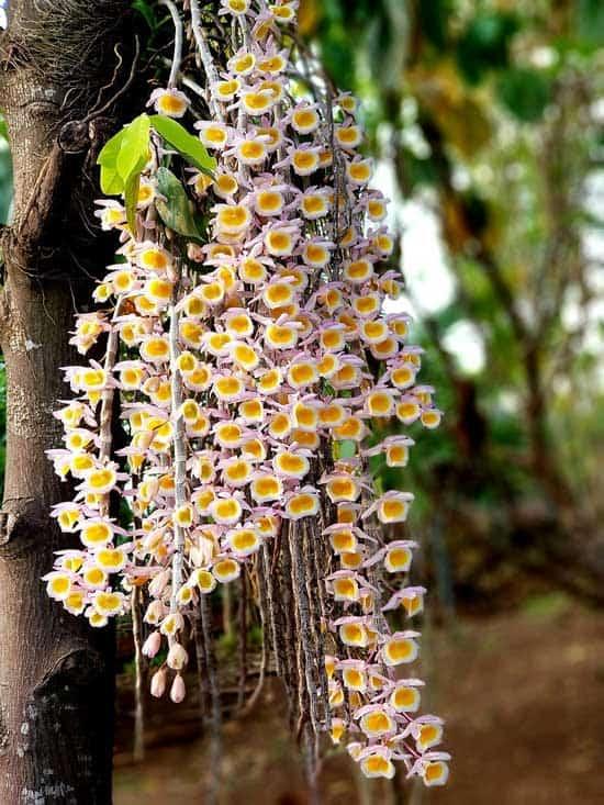 Amazing Indoor Hanging Plants Orchid