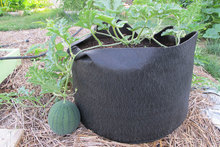 How To Grow Watermelons In Container