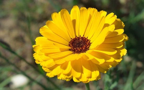 Worthy Easy and Fast Growing Flower Seeds Marigold