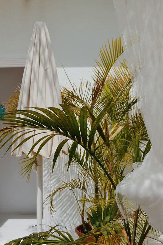 Best Bathroom Plants Majesty Palm