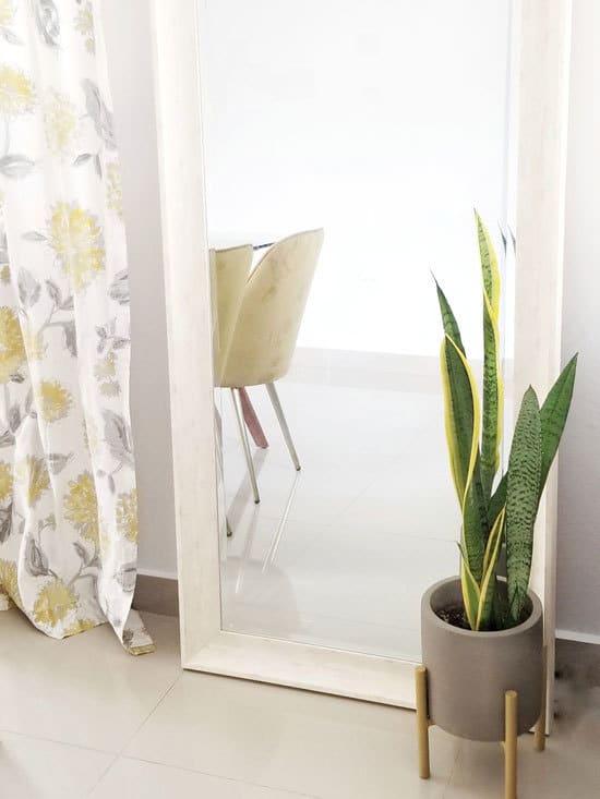 Best Bathroom Plants Snake Plant