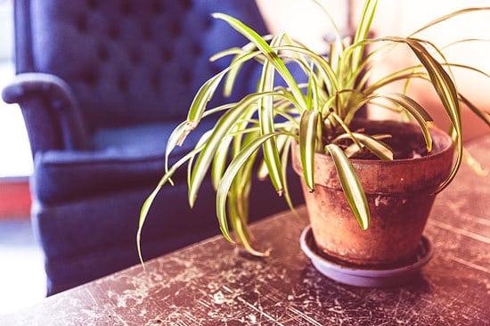 Best Bedroom Plants Dracaena