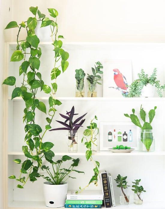 Best Bedroom Plants English Ivy