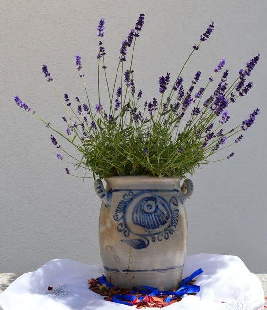 Best Bedroom Plants Lavender