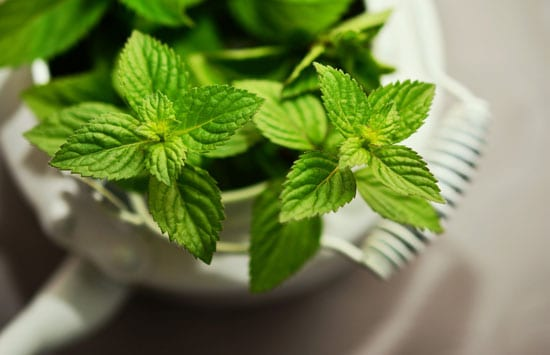Best Herbs to Grow Indoors Mint
