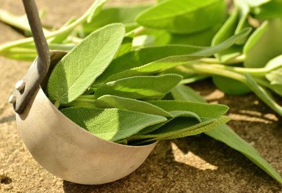 Best Perennial Herbs Garden Sage