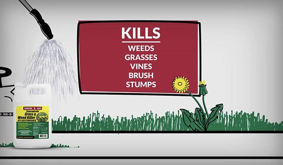 Best Weed Killer That Doesnt Kill Grass Compare N Save Weed Killer 2