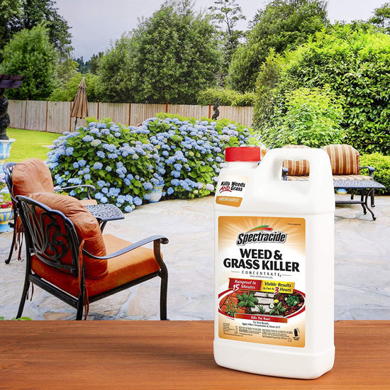 Best Weed Killer That Doesnt Kill Grass Spectracide Weed Grass Killer Concentrate